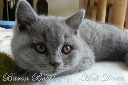 Baron Bobbie 2 meseca_1