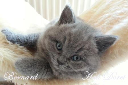 Bernard 6 tednov_1