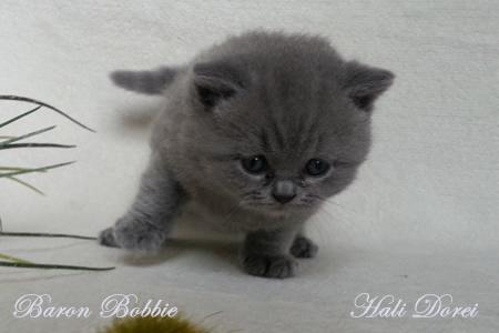 Mladicki Baron Bobbie 1 mesec