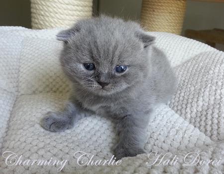 Charming Charlie_galerija_1