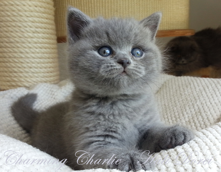 Charming Charlie_galerija_6