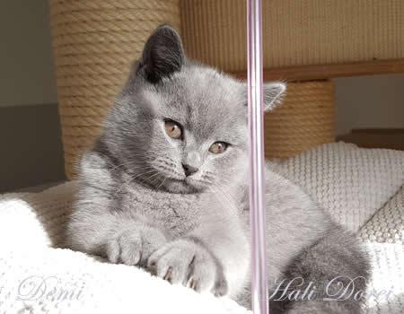 si_hali-dorei_demi_9-tednov_1