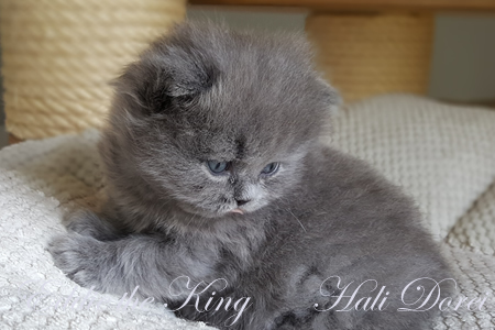 Eddie the King 4 tedne_1