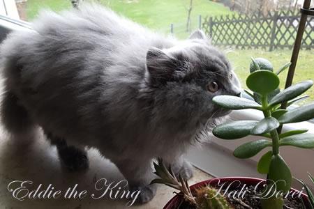 Eddie the King 14 tednov_1